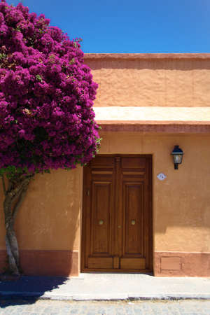 Wooden Door of House 76 with Pink Flowering Tree Colonia Uruguay