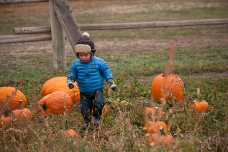 Toddler boy with brown aviator hat running in the pumpkin patch at the Pumpkin Harvest Festival, Denver, Colorado, October 2012 at Four Mile Historic Park
