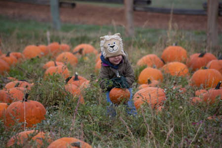 Toddler boy with lion hat picking pumpkin at the Pumpkin Harvest Festival, Denver, Colorado, October 2012 at Four Mile Historic Park