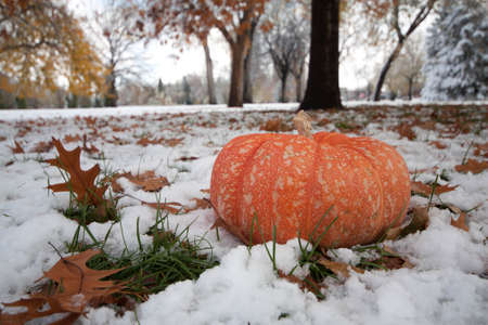 Cinderella Pumpkin in a park filled with snow and autumn leaves and trees Stock Photo