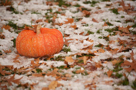 Snow Covered Fallen Leaves With Pumpkin