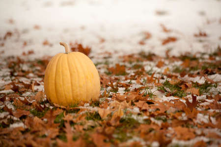 Snow Covered Fallen Leaves With Yellow Pumpkin photo