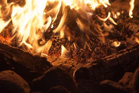 bridget calip: Pine Cones Burning in a Fire Stock Photo