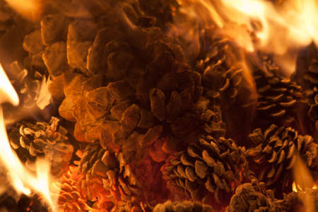 Pine Cones Burning in a Fire Stock Photo