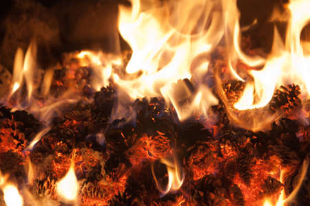 Pine Cones Burning in a Fire Stock Photo - 16618045