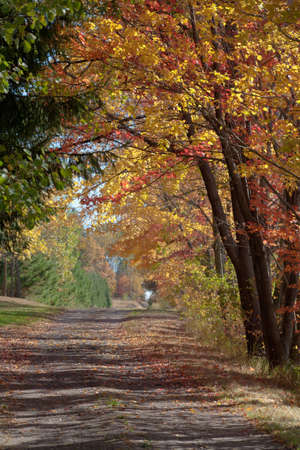 bridget calip: Dirt Country Road With Fallen Red and Gold Leaves in the Autumn Stock Photo
