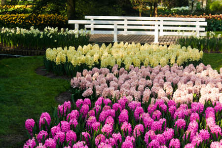 Pink and White Hyacinth With White Bridge