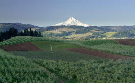 Mt  Hood From Fruit Orchards in Hood River Oregon Stock Photo