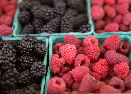 Fresh Picked Raspberries and Blackberries in Blue Boxes at Farmers Market