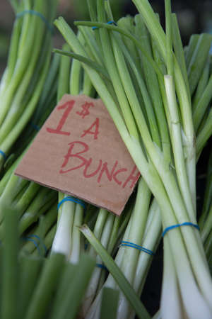 Bunches of Green Onions For Sale at the Farmers Market for a Dollar