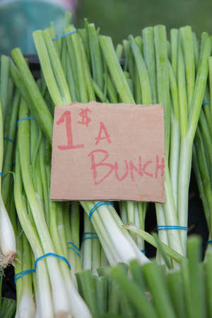 Bunches of Green Onions For Sale at the Farmers Market Stock Photo