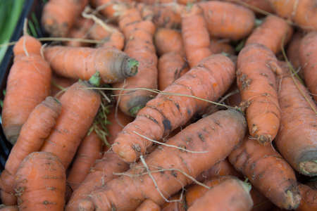 Fresh Organic Carrots For Sale at the Farmers Market photo