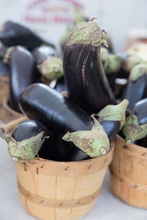 Locally Grown Fresh Organic Eggplant in Basket at the Farmers Market