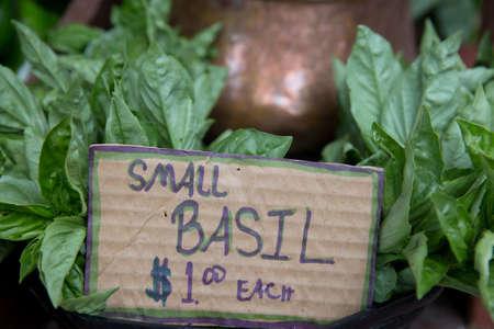 Small Organic Basil