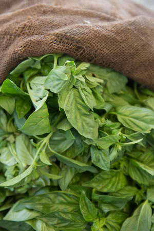 Fresh Organic Basil Herbs in Hemp Bag photo