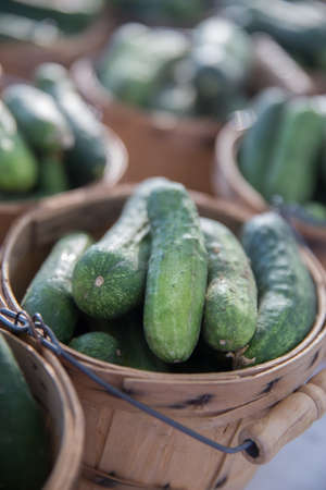 Fresh Organic Cucumbers for Pickles in Brown Bushel Baskets photo