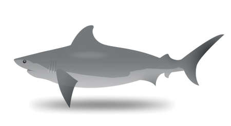Illustration of a shark on a white background Stock Vector - 19423098
