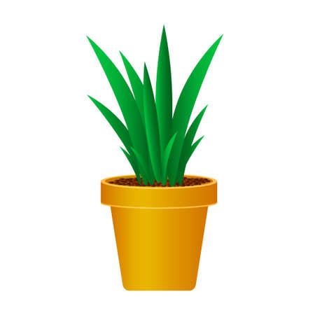 Plant in pot isolated on white background Vektorgrafik
