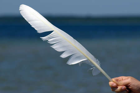 finger tip: Feather of swan Stock Photo