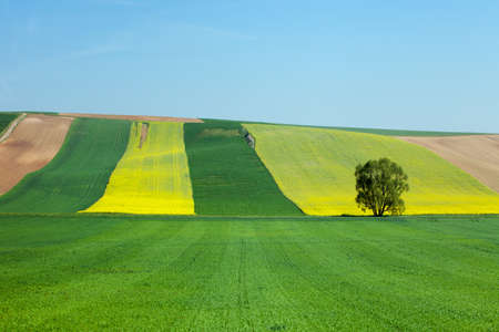 managed: Well managed farmlands at spring (May) at northern Austria (Europe)