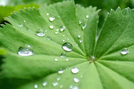 water drops on lotus flower Zdjęcie Seryjne