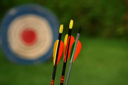 bow and arrow: archery arrows and target on a green background