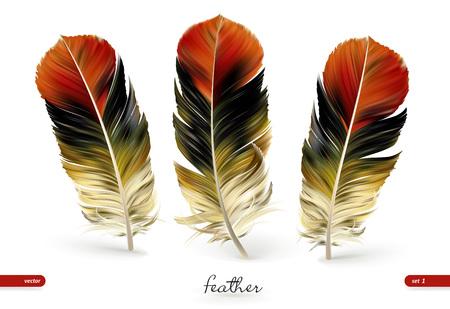 Ensemble de plumes réalistes - illustration vectorielle. Isolé sur fond blanc