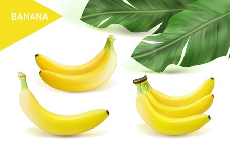 Vector realistic banana set. Design of natural, organic dairy products. Eps 10 Vektorové ilustrace