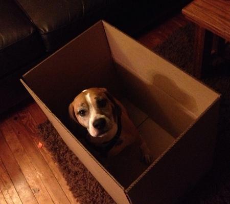 Dog in box  Reklamní fotografie