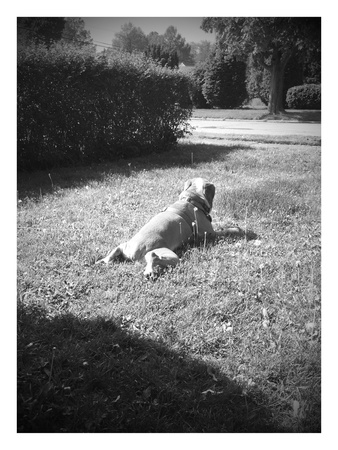 Sunbathing dog in black and white