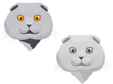 grey cat: Desing consists of one colored grey scottish fold cat and one black and white cat. Illustration
