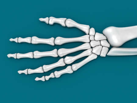 anatomy body: Digital illustration of a hand bone in green background  hand bone Stock Photo