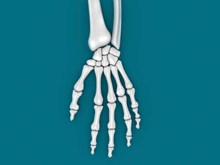 Digital illustration of a hand bone in green background  hand bone illustration