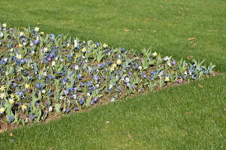 keukenhof: Keukenhof flower garden, Holland