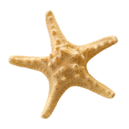 Beige starfish isolated on a white background  Stock Photo