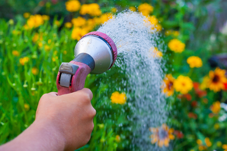 Close up view on a hand with a sprinkler, watering the yellow flowers in the green garden 版權商用圖片 - 121345352