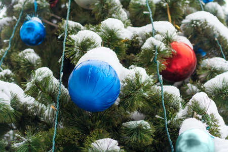 Close up view on blue and red balls on the Christmas tree covered by snow 版權商用圖片