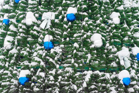 Blue and silver balls, bows on the Christmas tree covered by snow