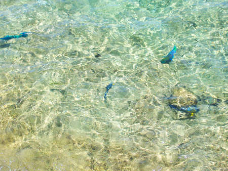 lear: Сlear transparent water in the shallows of the coastal beach