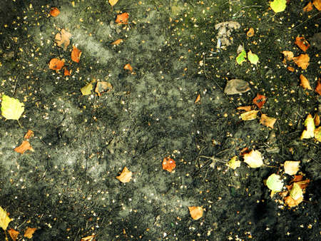 Scorched ground with dry autumn leaves for background and texture photo