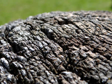 fissures: Painted wood texture with deep fissures Stock Photo