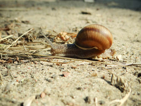 Snail crawling on the sand photo