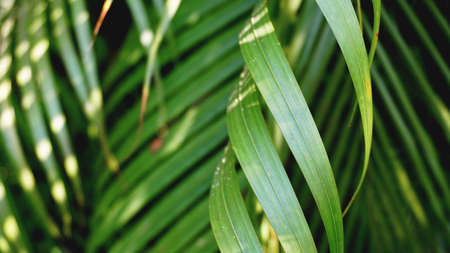 Green tropical palm leaves, floral pattern background, real photo