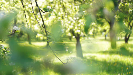 Beautiful spring park - bright green colors in sunlight Stockfoto