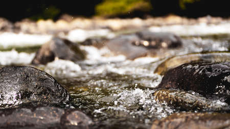 Rocky Stream Running Water. Stones in the water. Natural background