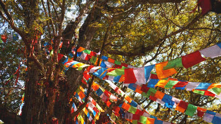 Multi-colored festive flags hang on the background of trees, large pine and blue sky. Stock fotó