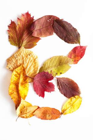 alphabetic character: alphabetic character B in autumn style Stock Photo
