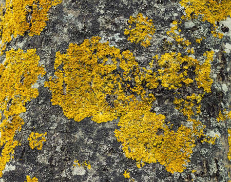 fungi: tree fungi texture