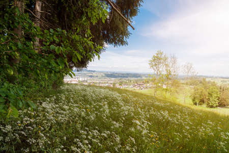 wil: nature landscape of forest clearing above a village in St. Gallen, Switzerland Stock Photo