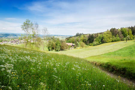 nature landscape of forest clearing above a village in St. Gallen, Switzerland Stock Photo
